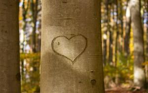 heart-1788493_1280